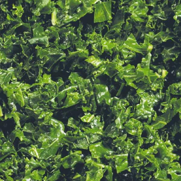 Gemüse Grünkohl Jütro Tiefkühlkost