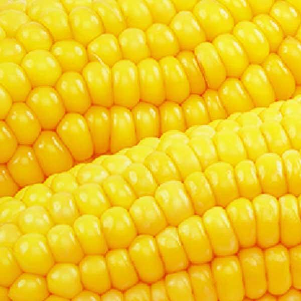 Gemüse Maiskolben Jütro Tiefkühlkost