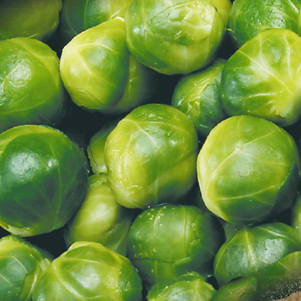 Gemüse Rosenkohl Jütro Tiefkühlkost