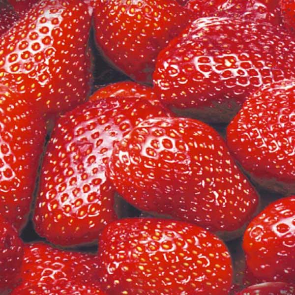 Obst Erdbeeren Jütro Tiefkühlkost