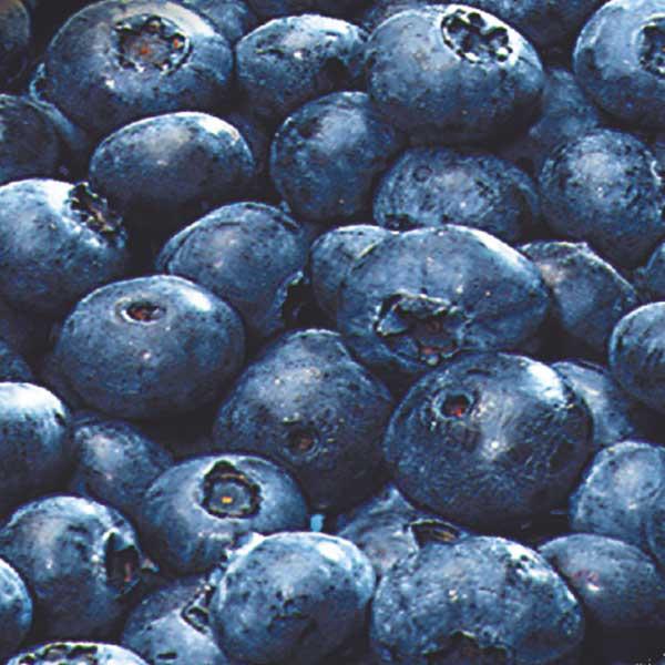 Obst Heidelbeeren Jütro Tiefkühlkost