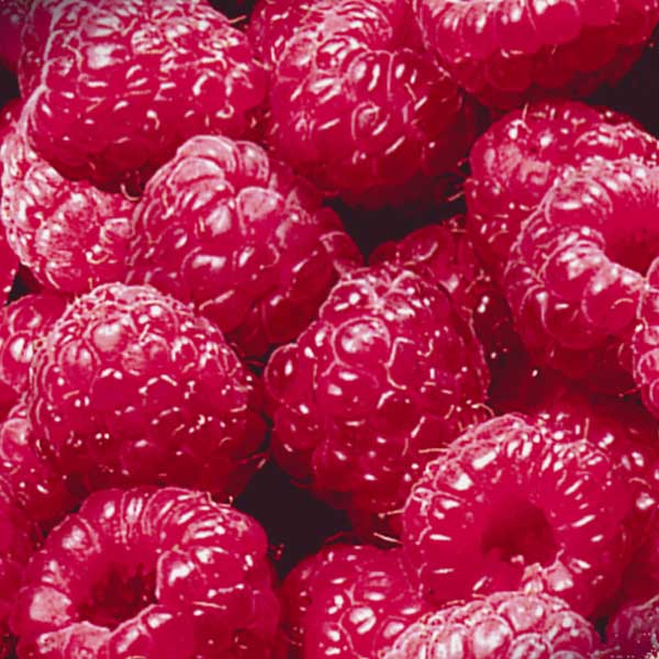 Obst Himbeeren Jütro Tiefkühlkost
